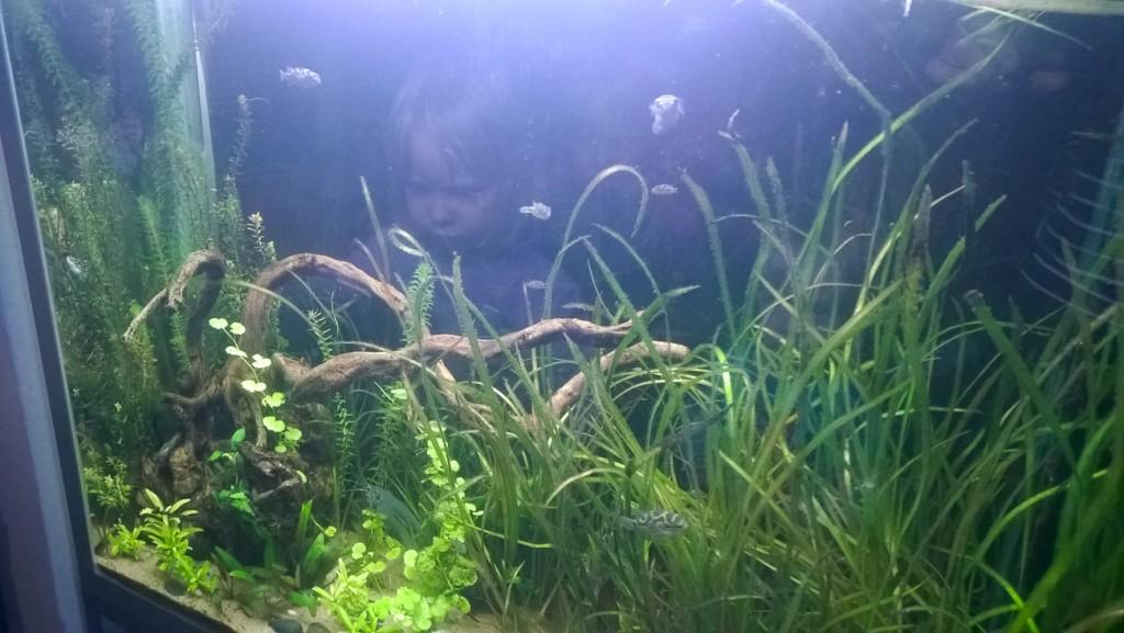 Kissakahvila Purnauskis akvaario